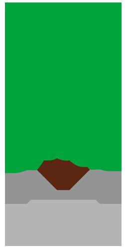 木(観葉植物)