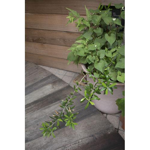 植物 鉢植え