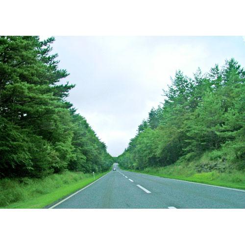 風景 道路