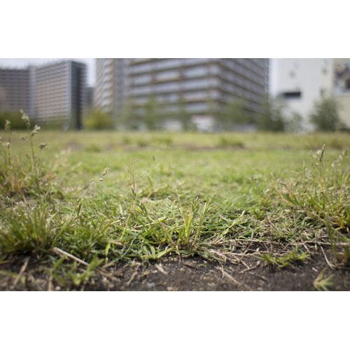 風景 芝生