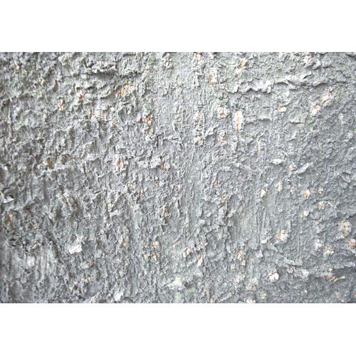 テクスチャ素材 樹皮