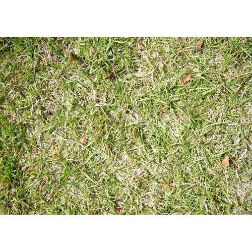 テクスチャ素材 芝生